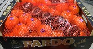 Marca Pardo Gold (Medium)